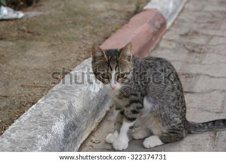 Tabby cat posture. Cute kitty looking down on cobblestone. - stock photo