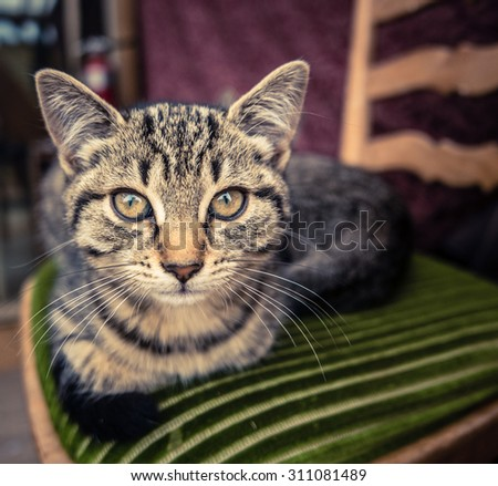 Tabby Cat Relaxing On A Kitchen Chair - stock photo