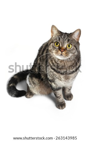 Tabby cat's portrait, isolated on white - stock photo