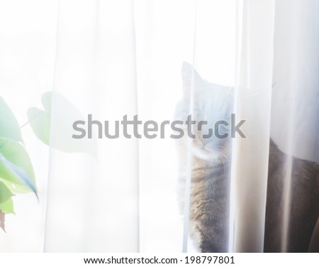 Tabby cat sitting at the window - stock photo