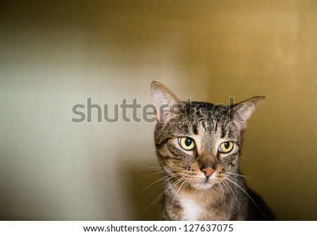 Tabby Cat Sitting in Kennel at Shelter Waiting to be Adopted - stock photo