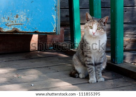 Tabby cat sitting near a cottage - stock photo