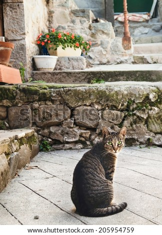 Tabby cat sitting on a pavement in Entrevaux, France. - stock photo