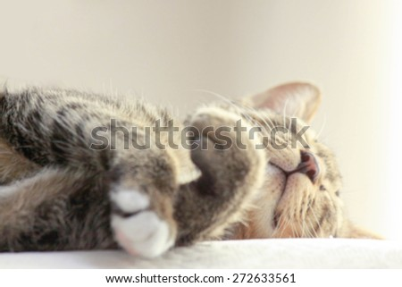Tabby cat sleep blurry background - stock photo