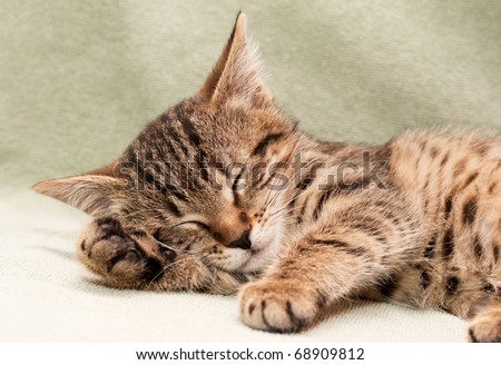 Tabby cat sleeps on bed