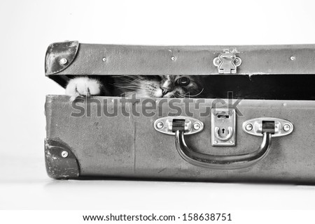tabby cat. suitcase - stock photo