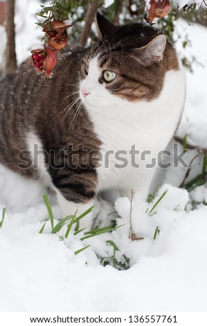 Tabby cat under a pomegranate tree with snow