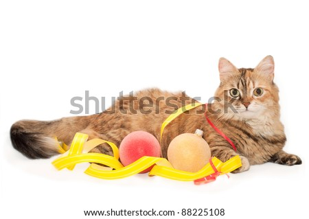 Tabby Cat with Christmas decoration, isolated on a white background - stock photo