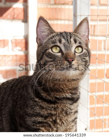 Tabby cat with green eyes looks out a window