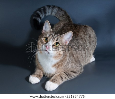Tabby cat with green eyes lying on gray background