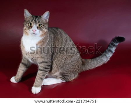 Tabby cat with green eyes lying on red background - stock photo