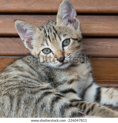 Tabby cat with green eyes lying on wood larder