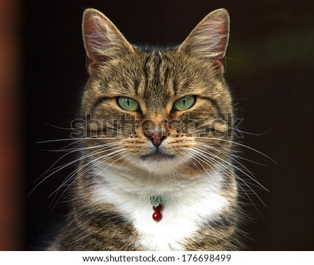 Tabby cat with jewelery