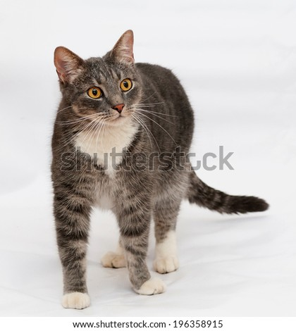 Tabby cat with orange eyes stands on gray background