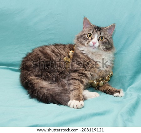 Tabby cat with yellow eyes playing with golden Christmas wreath on pale green background