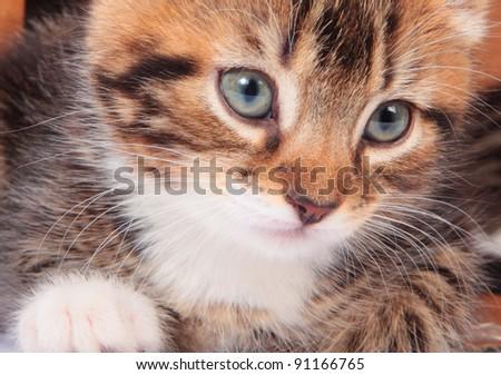 Extreme closeup ginger pussy bush