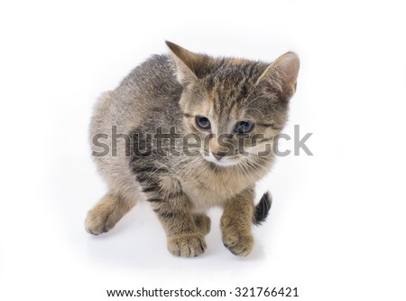 Tabby kitten isolated on a white background