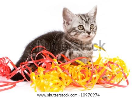 Tabby kitten isolated on white background - stock photo