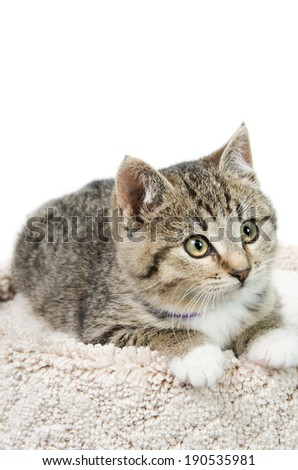 Tabby kitten lying on a carpeted bed, isolated on a white background. - stock photo