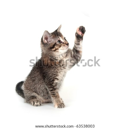 Tabby kitten playing and swinging its paw on white background - stock photo