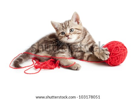tabby kitten playing red clew - stock photo