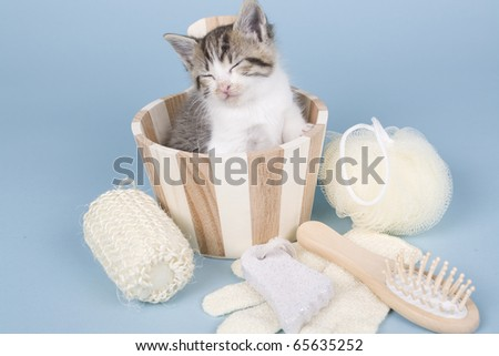 tabby kitten sitting in bath - stock photo