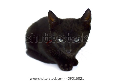tabby kitten sitting on white background superstition bad luck - stock photo