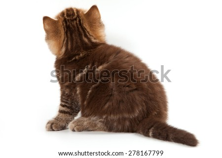 Tabby kitten sitting with his back (isolated on white) - stock photo