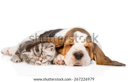 Tabby kitten sleeping, covered ear basset hound puppy. isolated on white background - stock photo