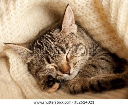 Tabby kitten sleeping on a white wool  - stock photo