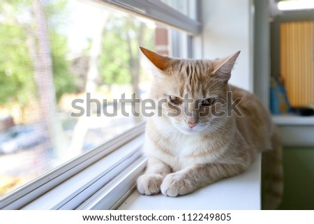 Tabby Kitty in the morning - stock photo
