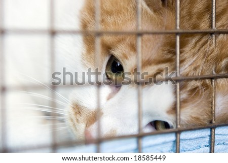 Tabby red cat looking up as he's held through the bars of his cage.