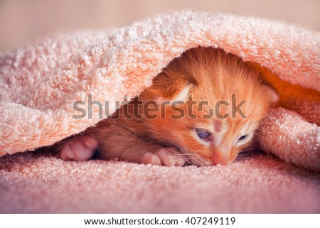 Tabby red kitten under the blanket  - stock photo