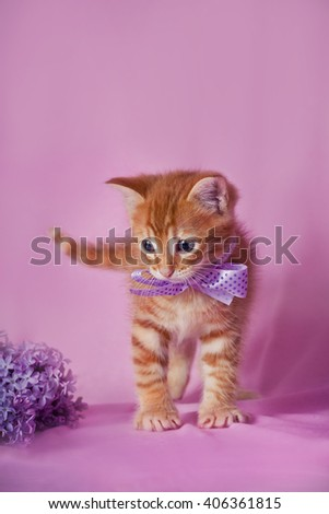 Tabby red kitten with violet ribbon  - stock photo