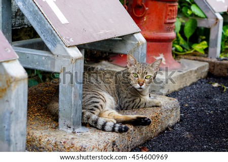 Tabby striped cat lying on path and looking at the photographer by curious eyes ( steet cat life )  - stock photo
