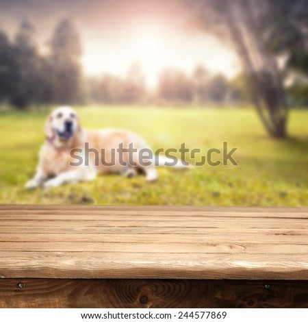 table and dog  - stock photo