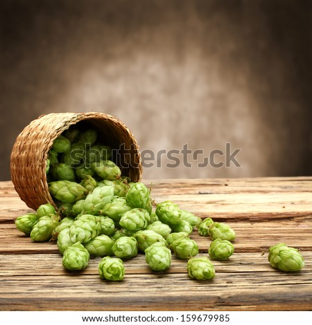 table of hop  - stock photo