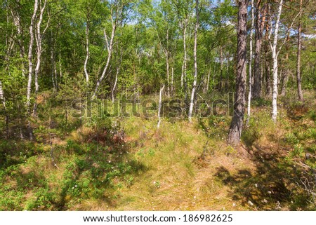 Taiga forest on a bog - stock photo