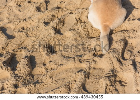 Tail of dog lay down on beach. Selective Focus. Concept background, suitable for use background and place text over photo. - stock photo