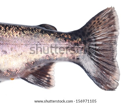 Tail of fish trout   - stock photo