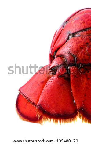 Tail of lobster on white background isolated - stock photo