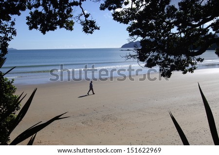 TAIPA, NZ - AUG 21: Old man walks on empty beach on Aug 21 2013.The latest figures from Statistics NZ show that women have long dominated life-expectancy rates, but men are fast closing the gap. - stock photo