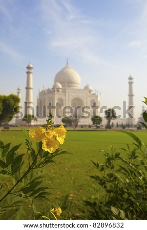 Taj Mahal and a yellow flower. - stock photo