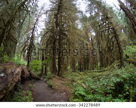 Taken at Hoh Rainforest, in the Olympic National Park, Washington - stock photo
