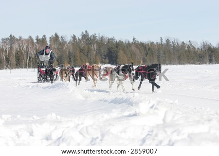 taken at warren ont dog sled races - stock photo