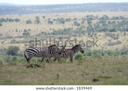taken from the high plateau of the Masai Mara in Kenya looking out over the plains of the Serengeti in Tanzania.