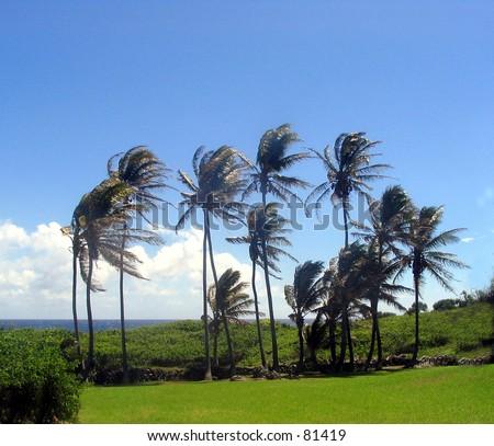 Taken on the road from Hana, at the base of the Haleakala Volcano, Maui Hawaii - stock photo
