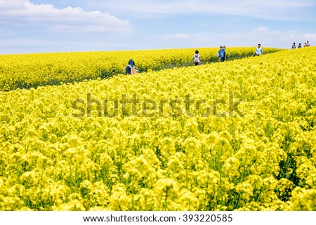 TAKIKAWA, HOKKAIDO, JAPAN - MAY 23, 2015: Takikawa Rapeseed festival is one of the best places to admire the canola flower fields. It is planted as a crop rotation. The venue rotates every year.