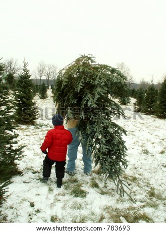 taking home the Christmas tree - stock photo