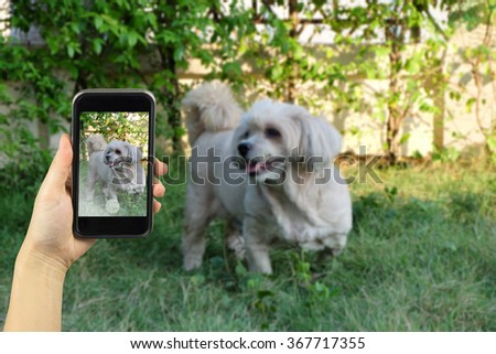 Taking photo on smart phone. - stock photo